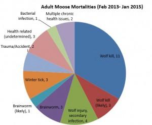 Moose mortality, DNR, Les Kouba Outdoors, Minnesota, Moose